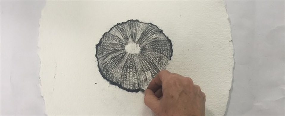 MC727-Drawing-Natural-Objects-in-Charcoal-960x390.jpg