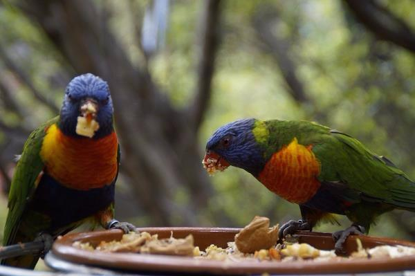 Feeding native birds with seed or bread is tempting but can have a serious impact on their health and lead to population imbalances.