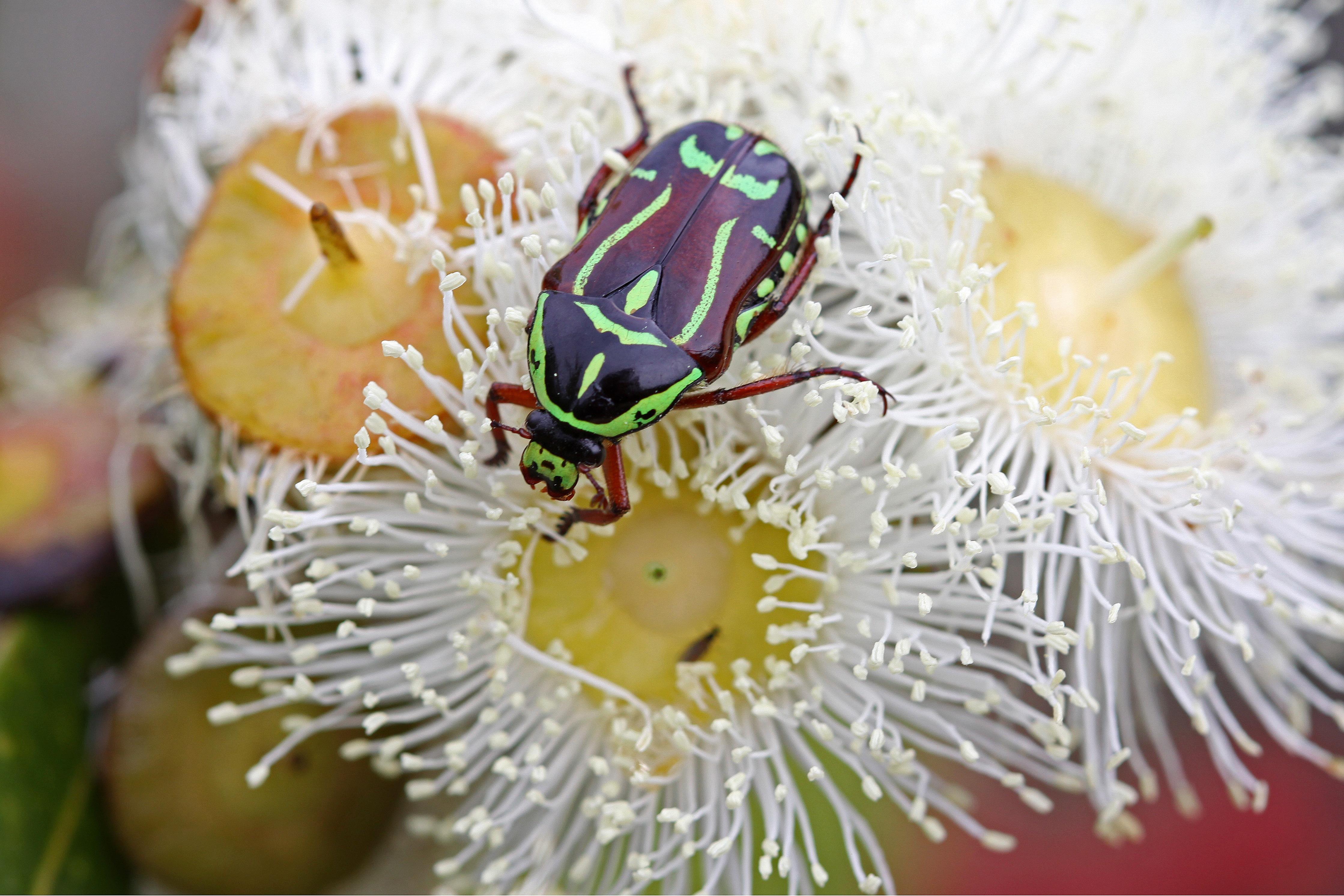 Beetle-on-Flower-©-Peter-Sparkes.jpg